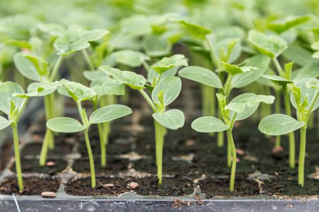 Curso en Cultivos Vegetales Gratuito.