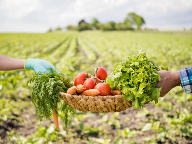 Cómo está estructurado el Curso en Técnico en Cultivos Vegetales