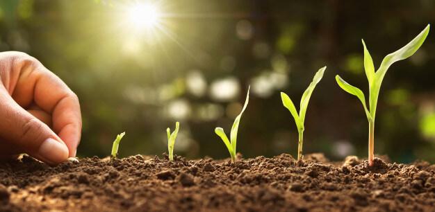 Temario de Curso en Cultivos Vegetales gratuitos