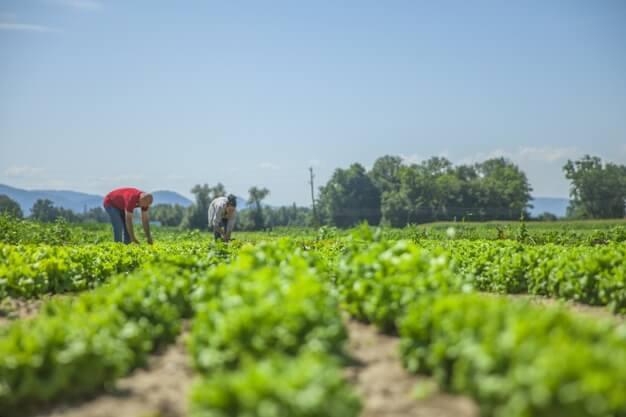 Curso en Técnico en Cultivos Vegetales gratuitos